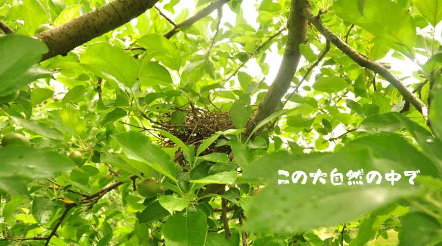 扇屋農園場の林にある鳥の巣