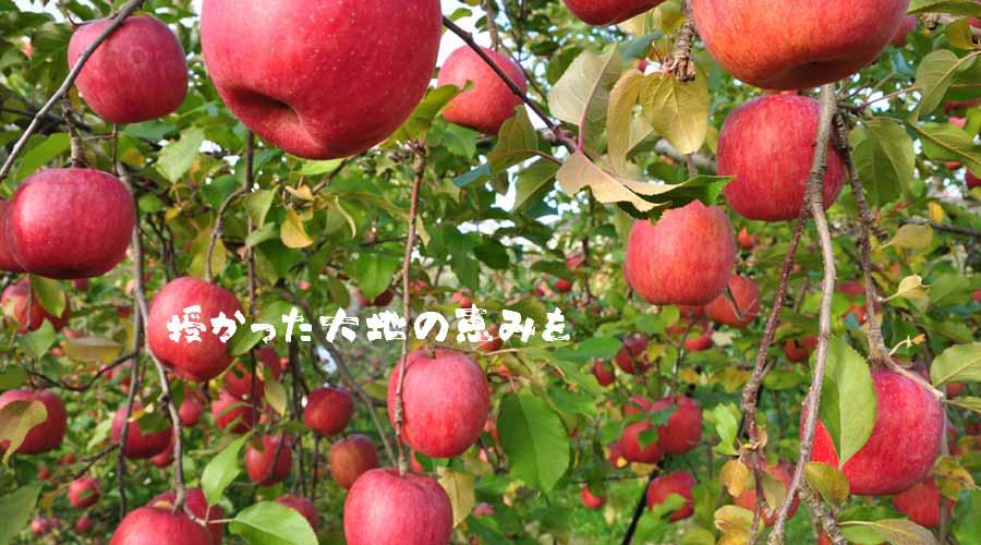 扇屋農園のりんご