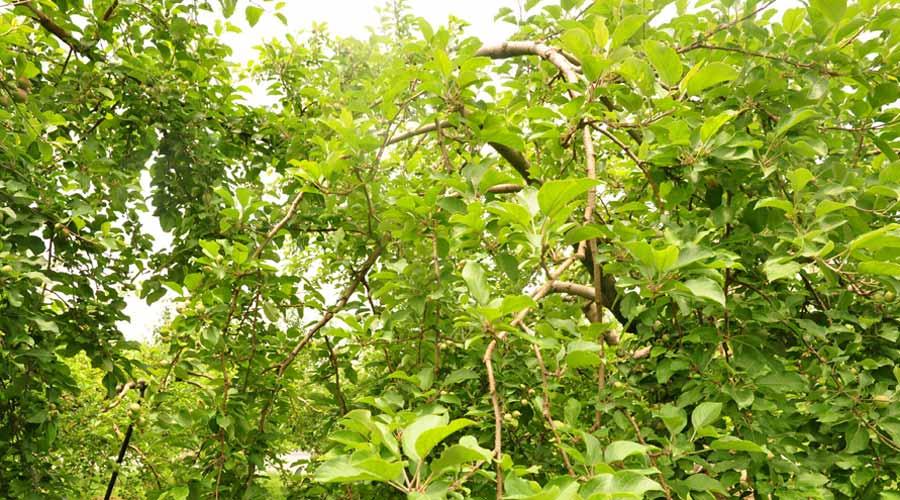 扇屋農園場の林